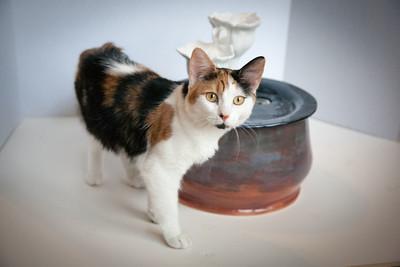 Cats&Fountain_80412-5032