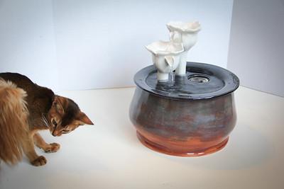 Cats&Fountain_80412-4858