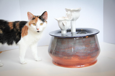 Cats&Fountain_80412-4871