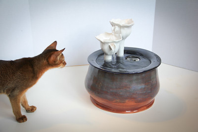 Cats&Fountain_80412-4861