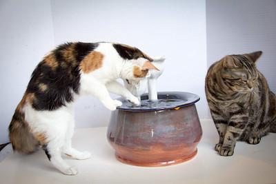Cats&Fountain_80412-4877