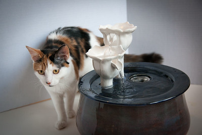 Cats&Fountain_80412-5046