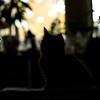 Cat Sillouette