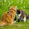 Cats conversation