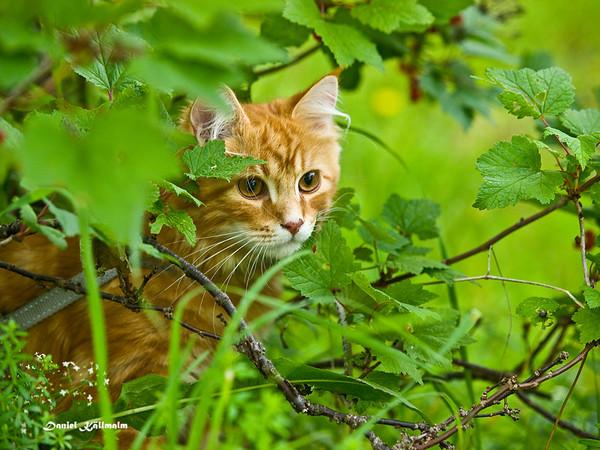 Sneaking amongst the berries