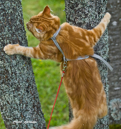 Climbing the trees