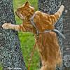 Climbing the trees