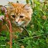 Botanic cat