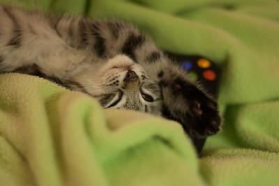Shy Sleeper