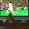Watching the Euro 2008