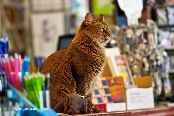 Salescat