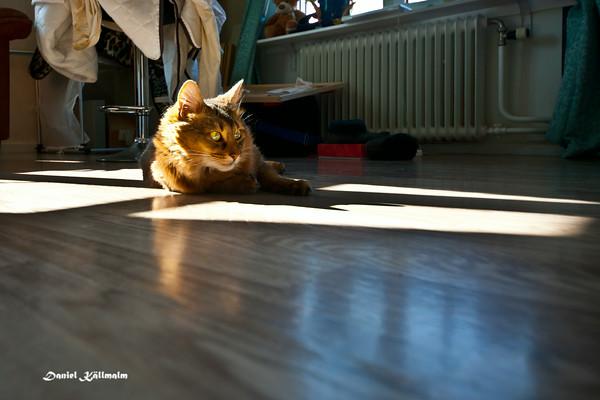 Pepper enjoys the sun