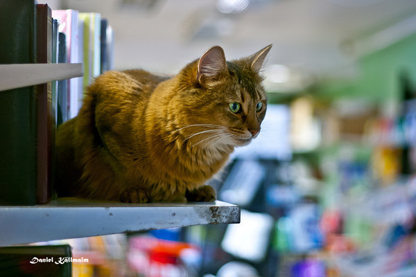 The Boss of the store
