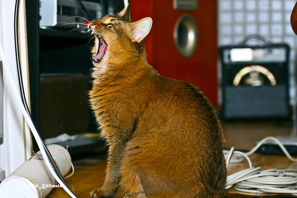 Roar!… or yawn