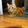 Kitten resting on the floor