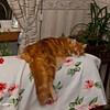 Lazy Chivas