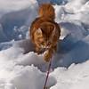 Making way through the snow