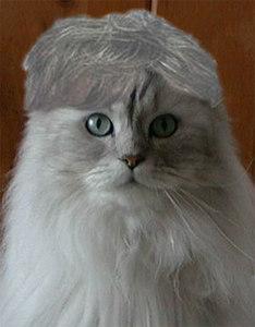 shatner-cat