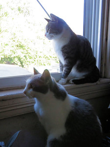 Pepper (on the window sill) and Miss Kitzie, June 14, 2019
