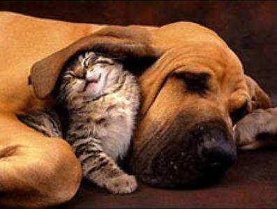 cute cat dog