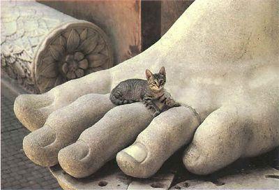 cats_o15
