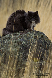 Close-up image of cat in a wilderness.