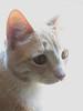 Lea's cat Poppet