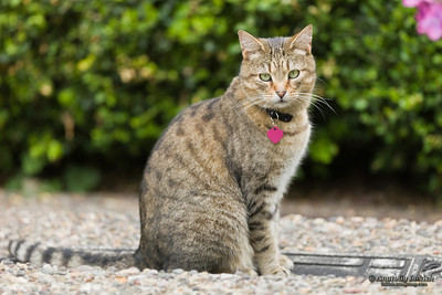 Cat outside.