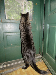 Bear looking out the door at the birdies, June 5, 2018