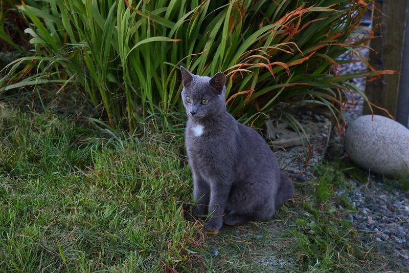 IMAGE: http://buttonmasher.smugmug.com/Pets/Cats/i-hZd8PTT/0/L/west%20harris%2012th%20october%202013%20012_filtered%20sharp-L.jpg