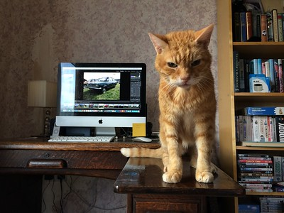 Hugo on my desk