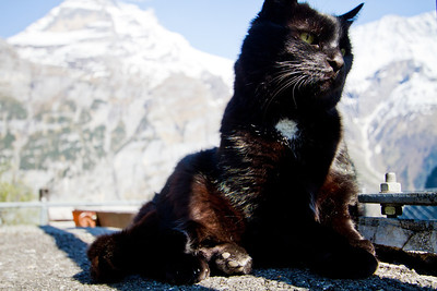 Cat Gimmelwald, Switzerland
