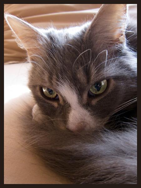 Jessie and Emma's cat Seri