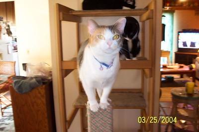 Sara the acrobat cat