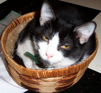 Chinny in her basket