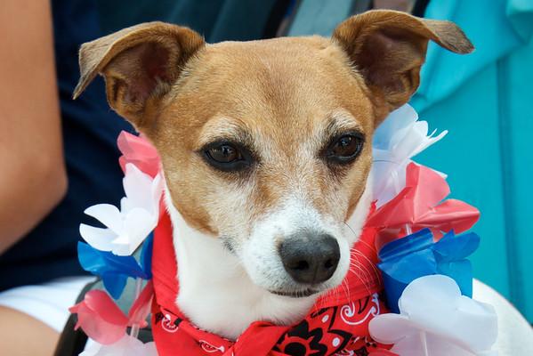 Celebration's 4th of July Dogs