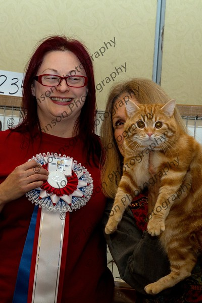 Central Jersey Cat Fanciers Cat Show - Parsippany 01-18