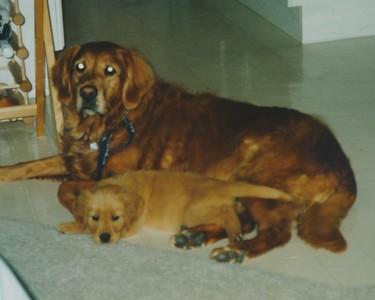 1995 Chandelle 10