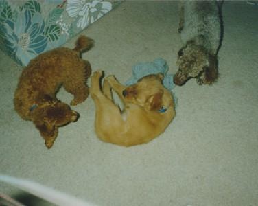 1995 Chandelle 19