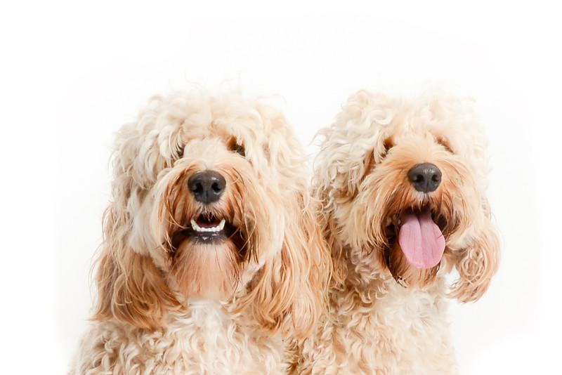 Charlie & Bailey