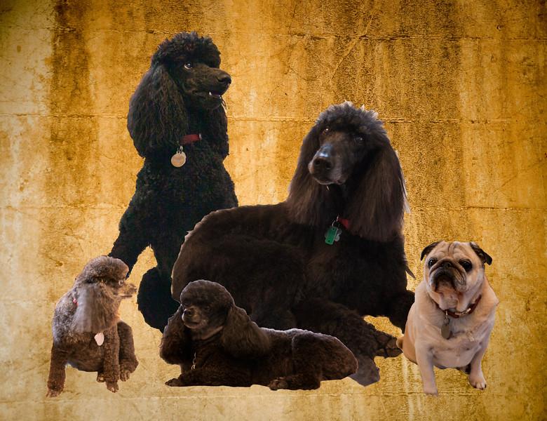 Doggie Collage