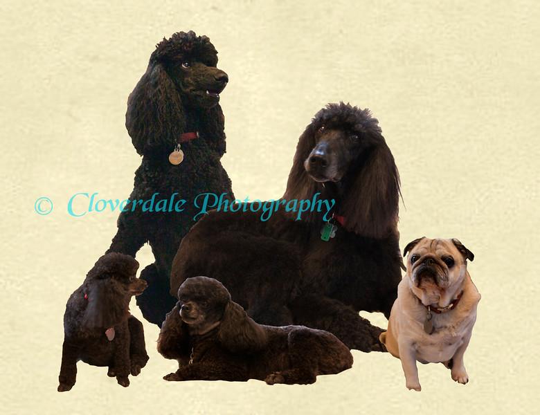 Doggie Collage-2