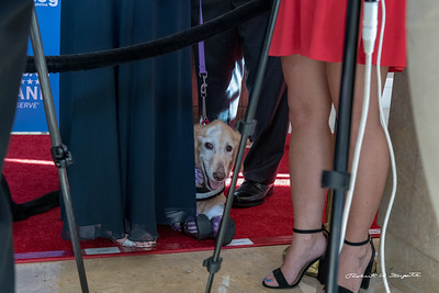 Chi Chi on the Red Carpet - taking a rest