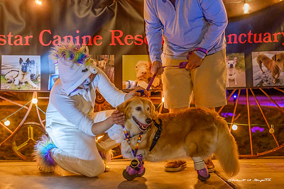 Chi Chi was Grand Marshall for the Phoenix DOGtoberfest canine rescue fund raiser.