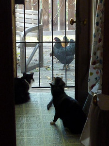 The cats (all indoor dwellers) are fascinated by the new critters in the back yard.