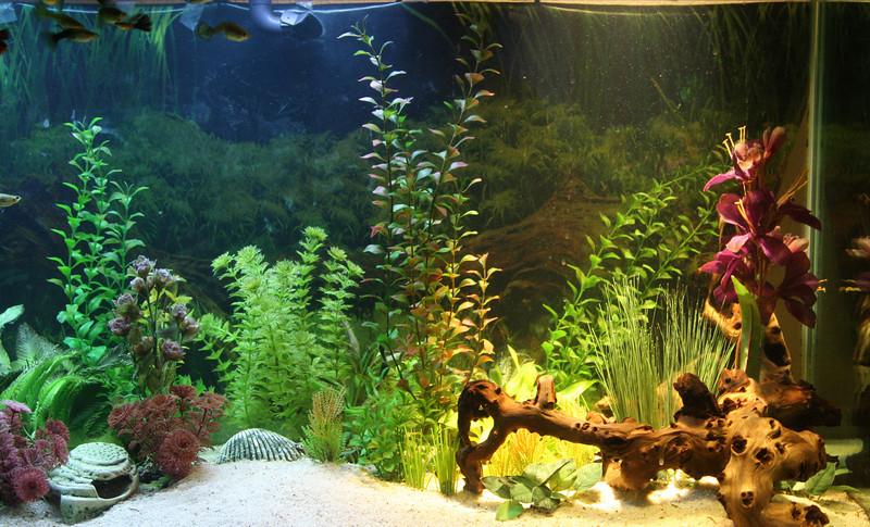100 Gallon Aquarium