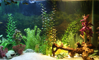 """Comparing lights trying to get some lighting ideas for my 210 gallon aquarium.  A 30"""" T5 HO strip light with actinic bulbs illuminating the left side.  An EcoSmart PAR38 18W LED floodlight on the right."""