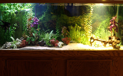 """Comparing lights trying to get some lighting ideas for my 210 gallon aquarium.  Cheapo 30"""" T8 strip light illuminating the left side.  An EcoSmart PAR38 18W LED floodlight on the right."""