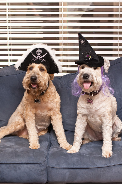 Bear the pirate and Chloe the witch