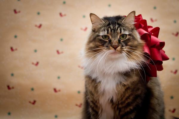 Max Christmas Portraits